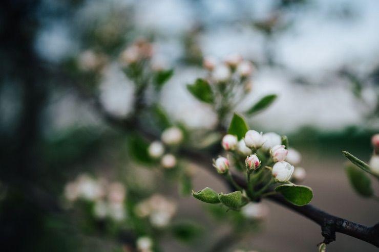 Spring image via Kaboom Pics